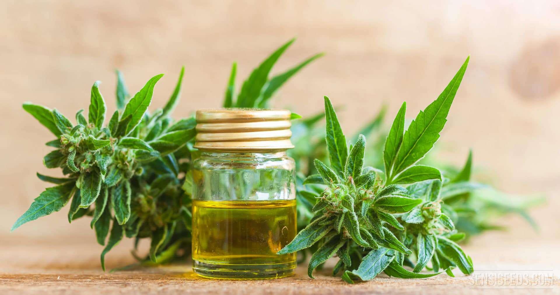 CBD Oil   Cherry Grove Drug